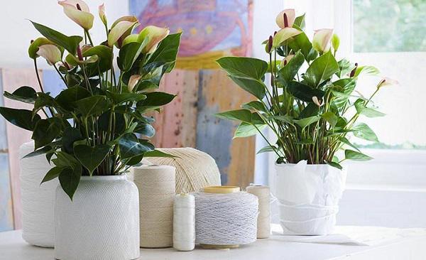 Những món đồ nội thất phòng khách mang may mắn tài lộc